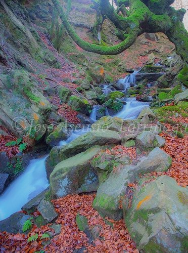 Parque Natural de Gorbeia   #DePaseoConLarri #Flickr      -2792