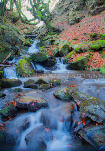 Parque Natural de Gorbeia   #DePaseoConLarri #Flickr      -2783