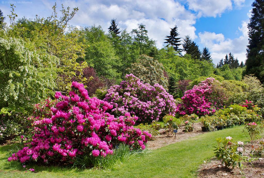 Meerkerk Rhododendron Gardens - Whidbey Island | Patrick McManus ...