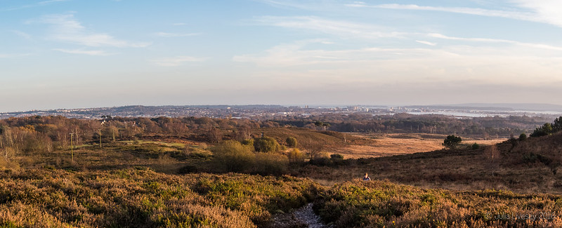 The winter sun shines over Upton heath