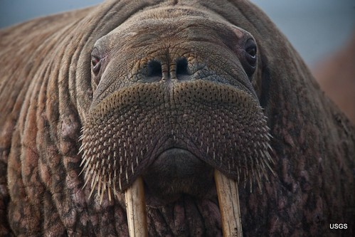 A Face Only a Mother Could Love? | by U.S. Geological Survey