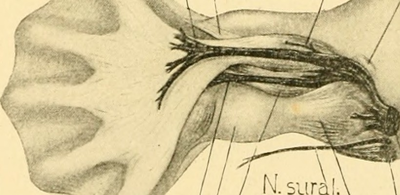 Image From Page 443 Of The American Journal Of Anatomy Flickr