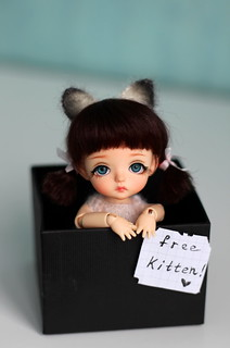 free kitten | by Julia Rebeskova