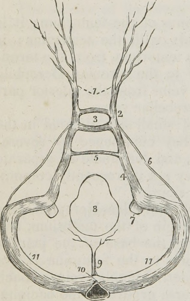 Image From Page 357 Of A System Of Human Anatomy General Flickr