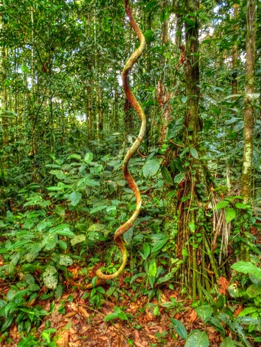 Helix | more photos from the Yasuni Research Station in my ...
