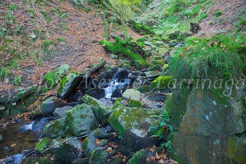 Parque Natural de #Gorbeia #DePaseoConLarri #Flickr      -1450