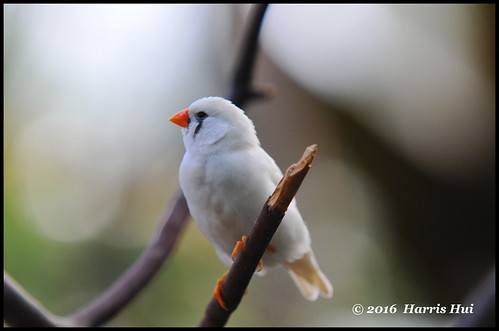 H Finch Lighting Finch? - Bloedel Conse...