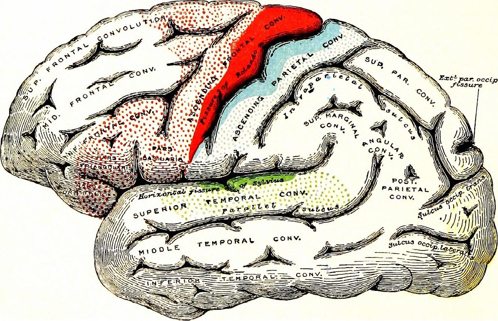 Image From Page 97 Of The Nervous System An Elementary H Flickr