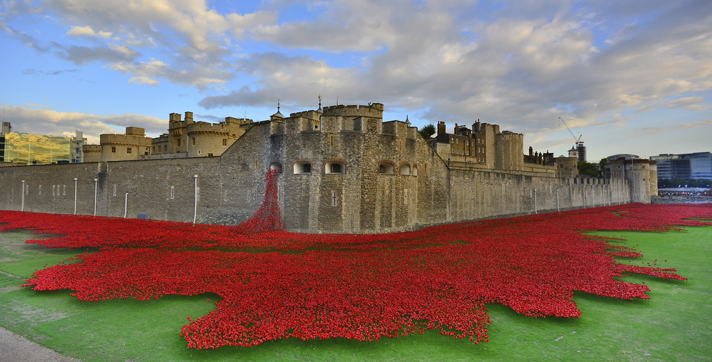 Image result for poppies at tower of london copyright free photo