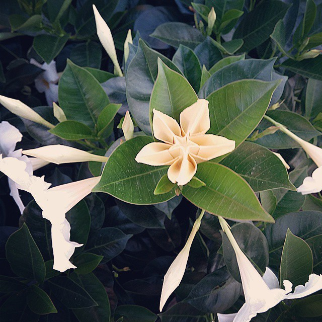 Like a real flower origami carambola flower origami fl flickr like a real flower origami carambola flower origami flower carambola mightylinksfo