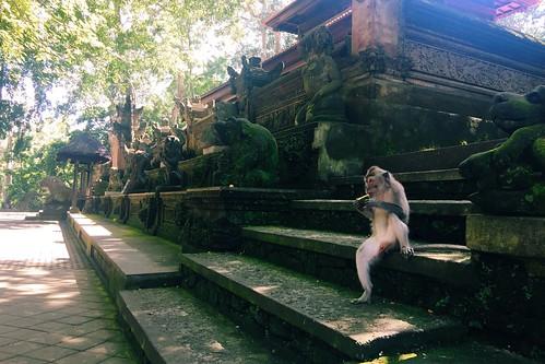 Ubud Monkey Forest 2