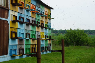 Beekeeping in Romania | by CharlesFred