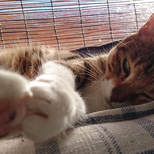 猫ベッドのサイズが合っていないみたい by Chinobu