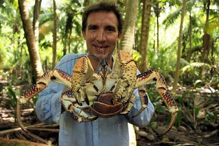 1.Smaller-British Indian Ocean Territory - Coconut Crab (by Simon Vacher)1-1