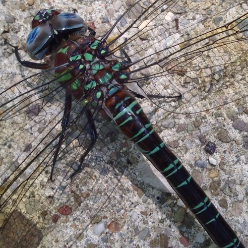 #dragonfly | by stuleelight