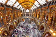 Музей естествознания. Natural History Museum