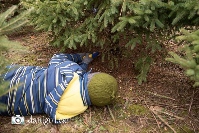 Christmas tree picking 2016-2