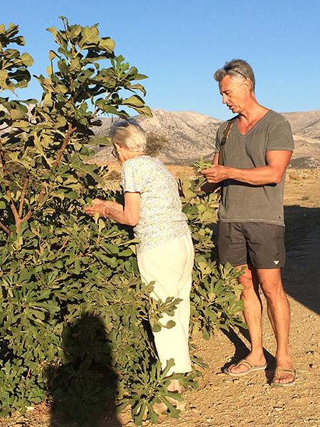 cueillette de feuilles de figuiers