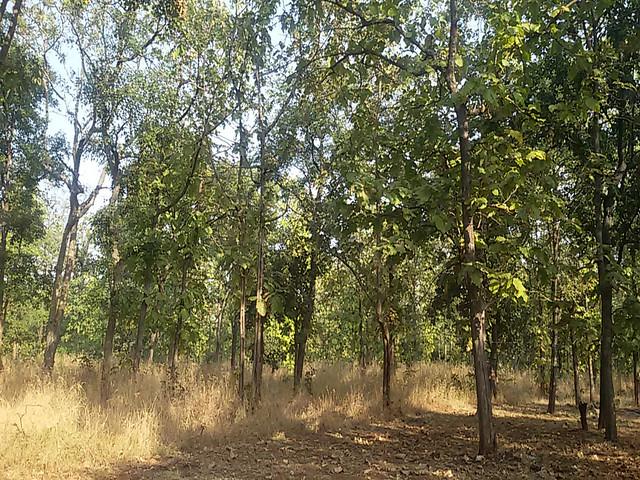किसानों द्वारा लगाए गए जंगल