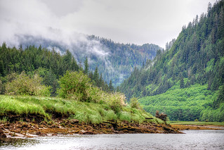 Great Bear Rainforest Tours Prices