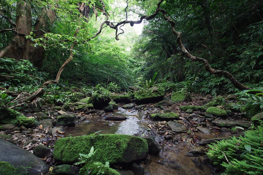 Exceptional ... Jungle Floor Of Iriomote Islandu0027s Lush Rainforest, Tropical Japan | By  SamKent22