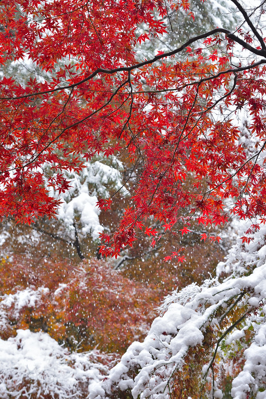 Red leaf in white
