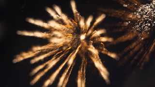 Fireworks focus experiments | by colink.