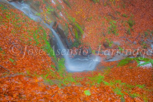 Parque Natural de #Gorbeia #DePaseoConLarri #Flickr      -1997