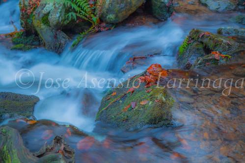 Parque Natural de Gorbeia   #DePaseoConLarri #Flickr      -2748