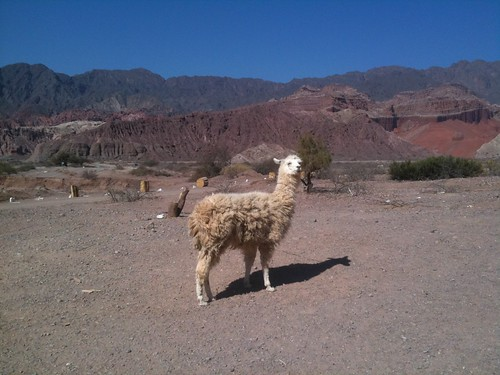 Llama-Salta, Argentina | by Endless Turns Ski & Adventure Travel