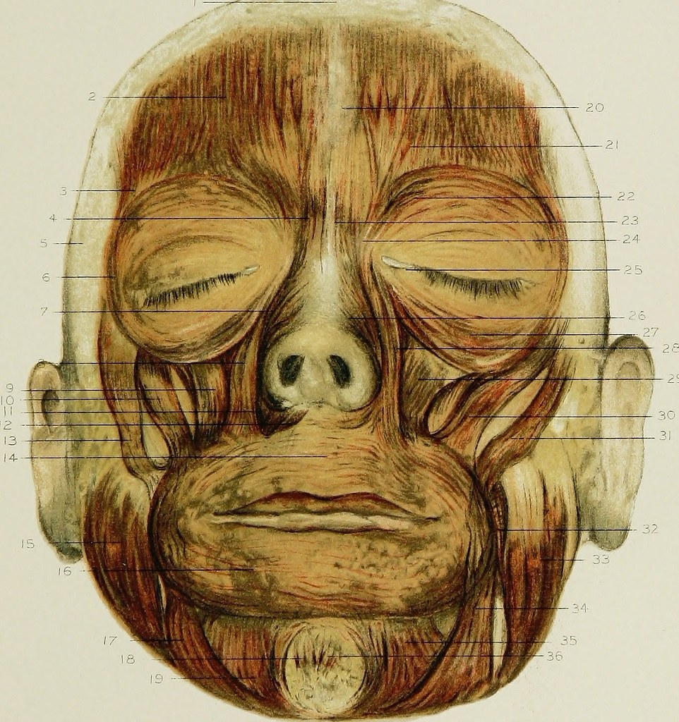 Image From Page 176 Of Regional Anatomy In Its Relation T Flickr