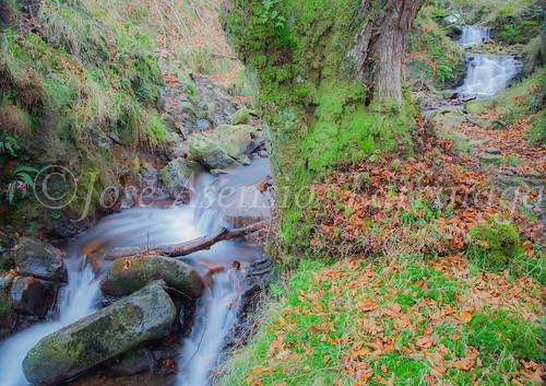 Parque natural de Gorbeia #DePaseoConLarri #Flickr      -2017