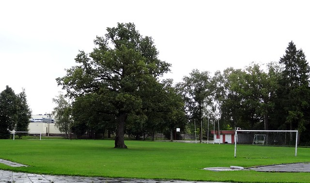 Saaremaa Island: football ground with tree on the pitch…