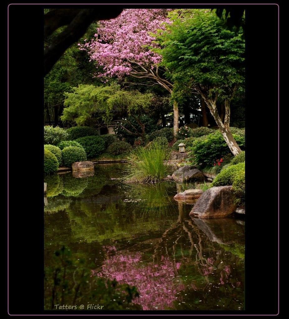 Японский сад japanese garden in mt coot tha bg brisbane flickr