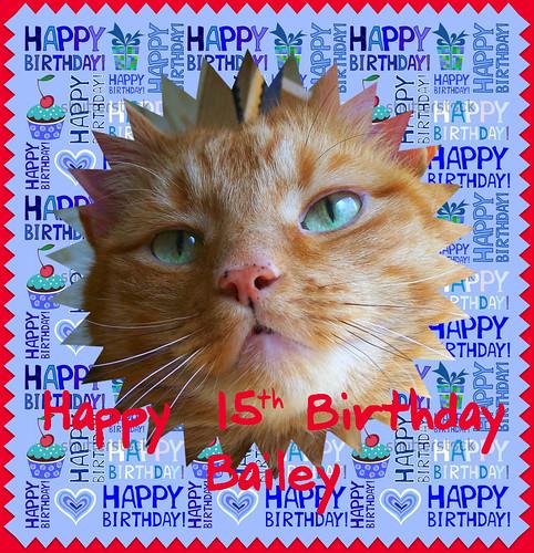 Bailey S Birthday Cake