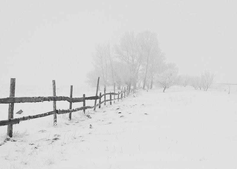 winter-nature-season-trees-65911-large