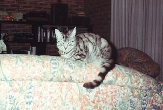 1994_08_PascallOnBackOfSofa4