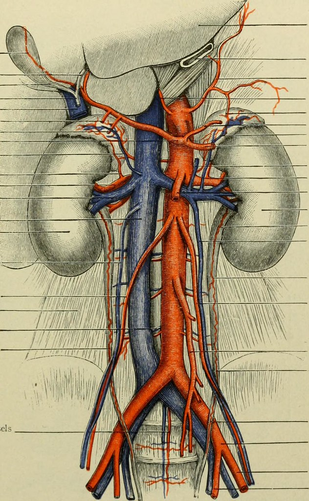 Image From Page 190 Of Text Book Of Anatomy And Physiolog Flickr