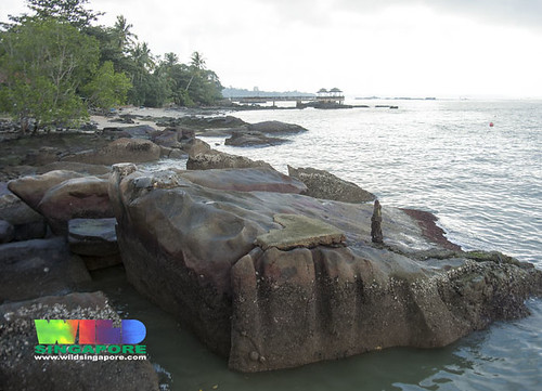 Natural rocky shore next to Pulau Ubin Jetty