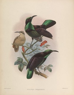 n147_w1150 | by BioDivLibrary