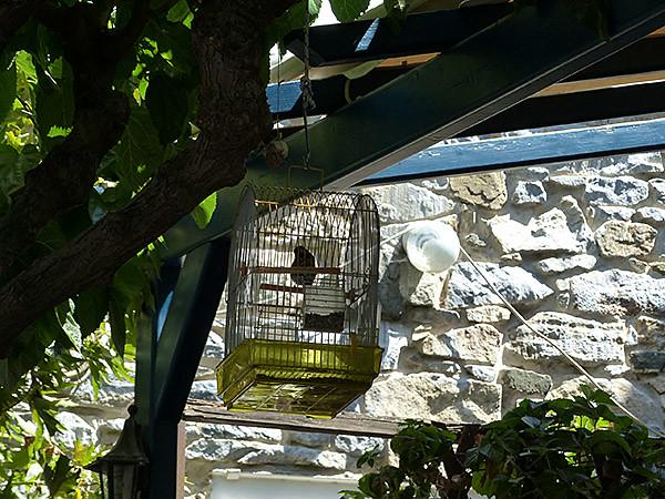 oiseau en cage à Filoti