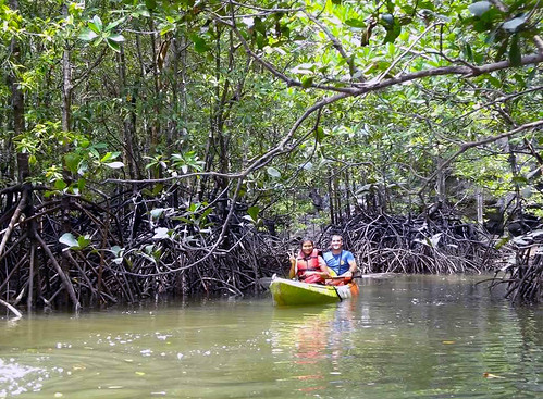 Kayaking Mangroves near Krabi
