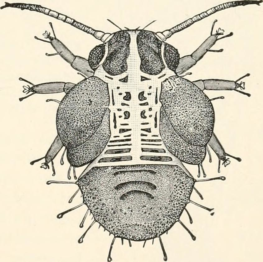 Image From Page 184 Of A Text Book Of Entomology Includi Flickr