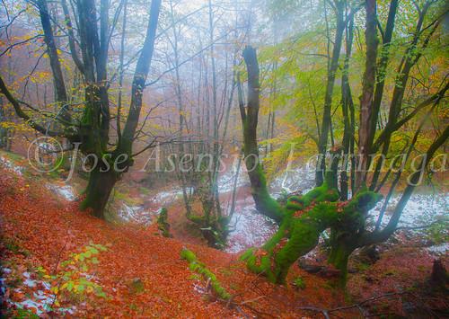 Parque Natural de #Gorbeia #DePaseoConLarri #Flickr      -1999