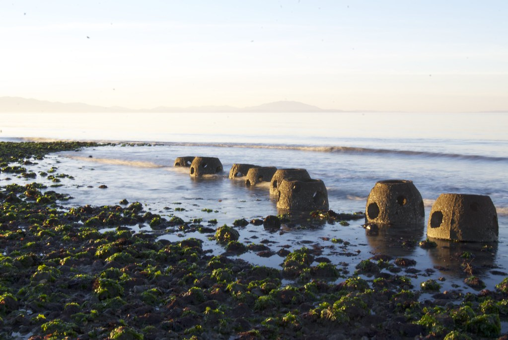 Point Pinole reef