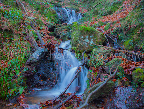 Parque Natural de Gorbeia   #DePaseoConLarri #Flickr      -2782