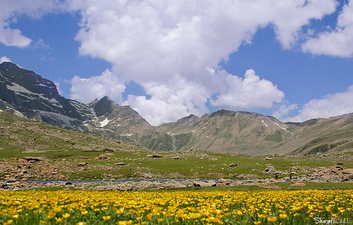 flowers&mountains | by sharat_kolke