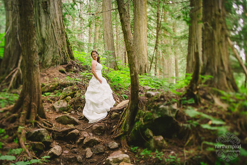 Andrea - Ancient Forest Wedding Session | by Shauna Stanyer (Northern Pixel)