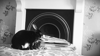 Greta Reading the Sunday Papers | by Grand Mookster