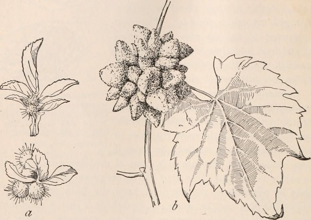 image from page 397 of a textbook of botany for colleges flickr